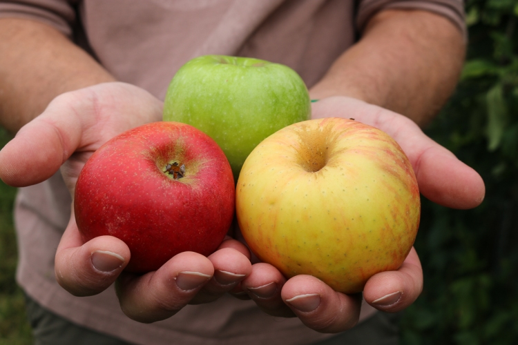 apple-picking-in-bluemont-3981